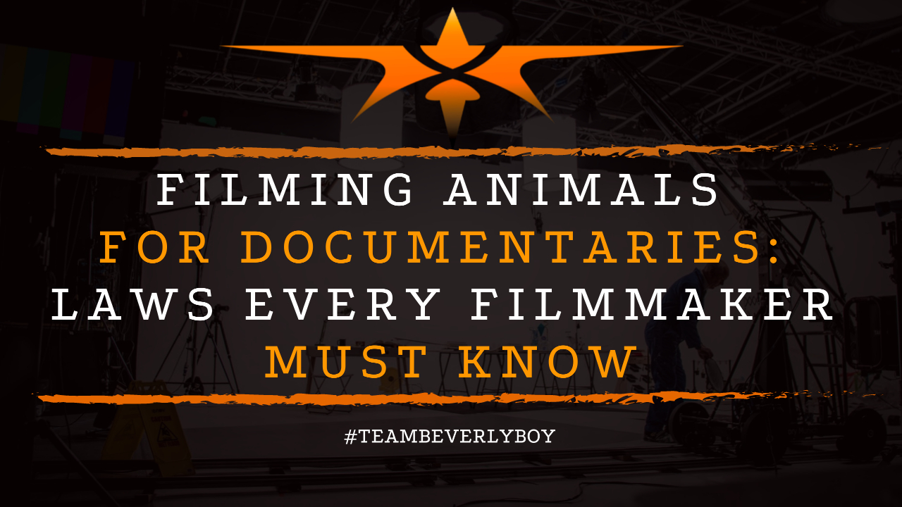 Filming Animals for Documentaries- Laws Every Filmmaker Must Know