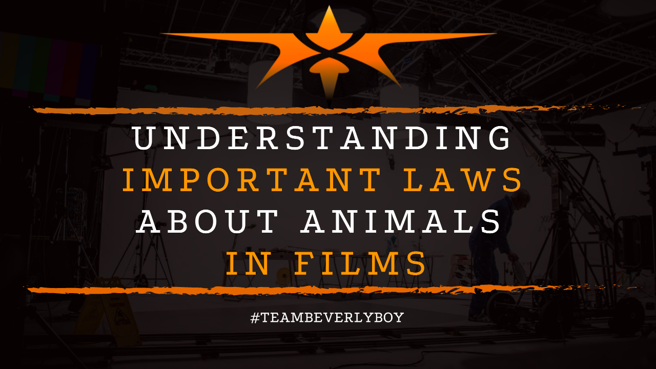 Understanding Important Laws About Animals in Films